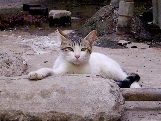 cat Tiwari Juhu 2