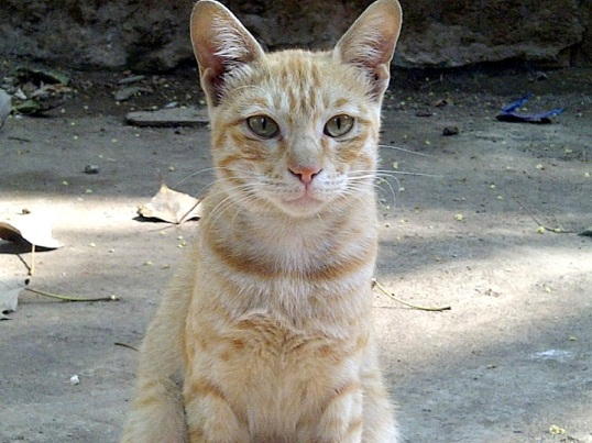 cat Tiwari Juhu 3