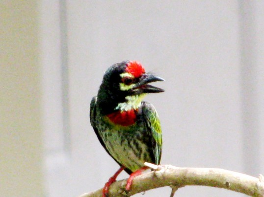 little bird 3