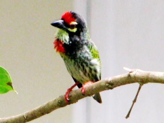 little bird 6