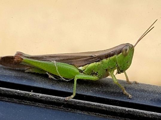 grasshopper Silchar to Agartala highway